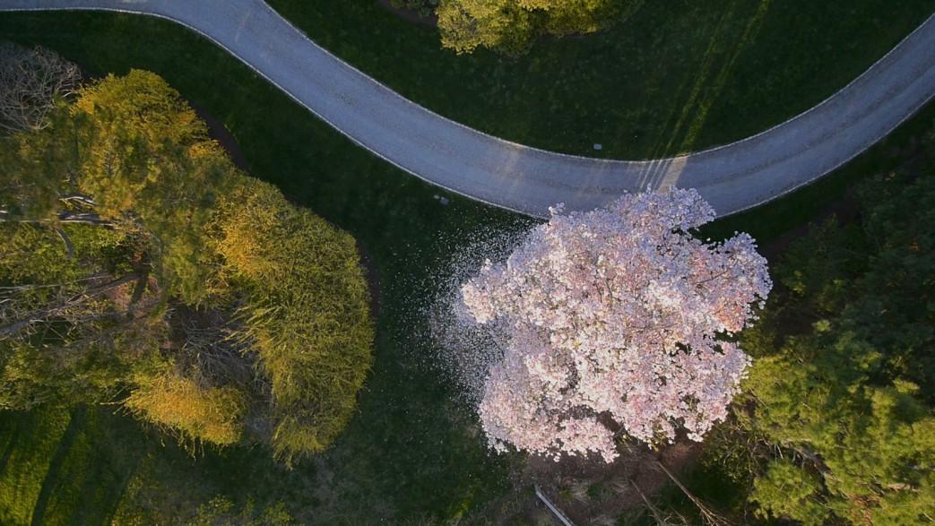 aerial-tree3